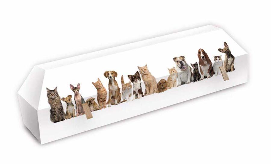 cercueil-en-carton-animaux-de-compagnie