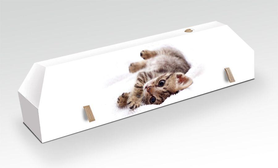 cercueil-en-carton-chat