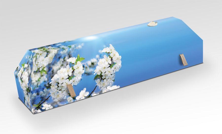 cercueil-en-carton-fleurs-de-ceriser-blanc