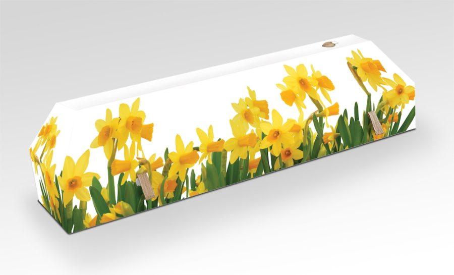 cercueil-en-carton-fleurs-de-joncquille
